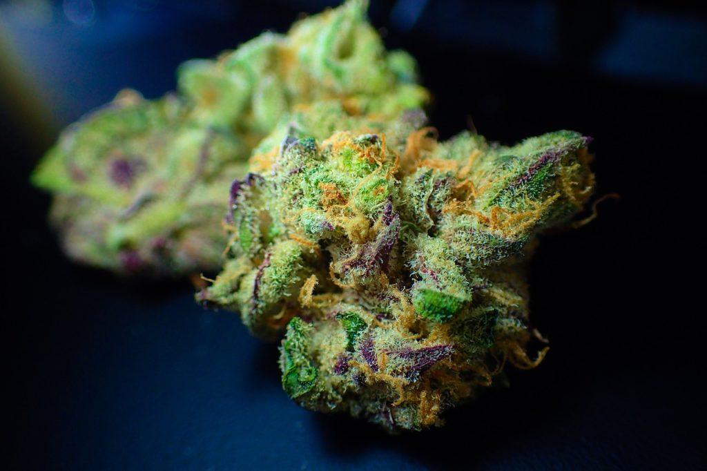 highest potency CBD flower
